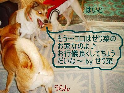 b0006329_1922315.jpg