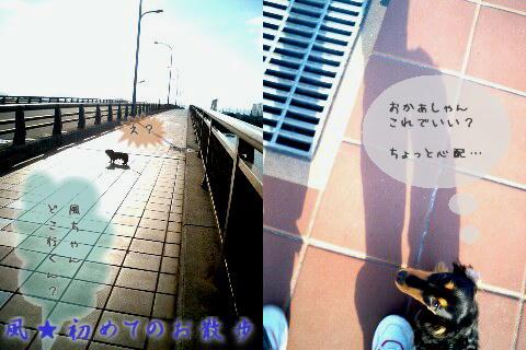 b0048649_231556.jpg
