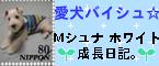 b0039503_22432373.jpg
