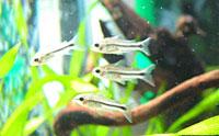 ついにお魚を投入した!_b0024412_21473341.jpg