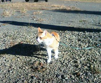 キャンプ猫誕生_b0019333_22474844.jpg