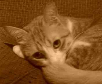 猫の知ったことではないが_b0019333_1325341.jpg
