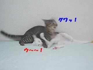 b0024945_2338035.jpg
