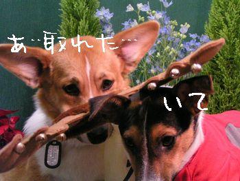 b0002585_131372.jpg