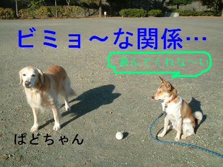 b0069163_1682499.jpg