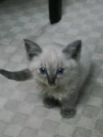 ノラ猫さんが我が家にやってきた。_c0006826_20241496.jpg