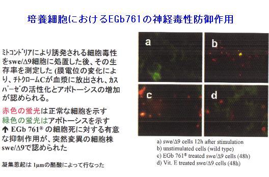 b0035141_1739339.jpg