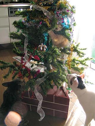 狙われたXmas Tree_a0028451_134041.jpg