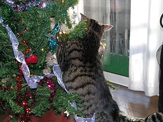 狙われたXmas Tree_a0028451_1341381.jpg