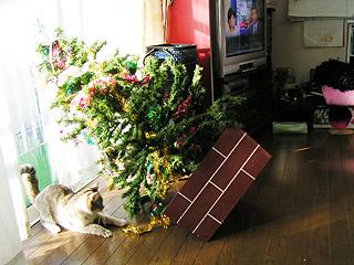狙われたXmas Tree_a0028451_1344499.jpg