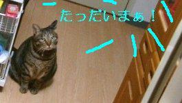 b0058936_2133762.jpg