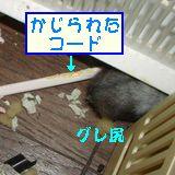 b0016983_13501131.jpg