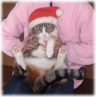 クリスマスイブイブ_b0040332_1323314.jpg