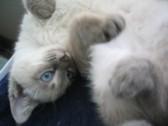 猫の言い分4_c0006826_8452649.jpg