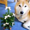 メリークリスマス!_b0011075_12522935.jpg