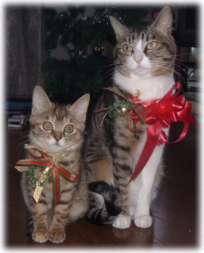 クリスマス終了&撤収_b0040332_11452437.jpg