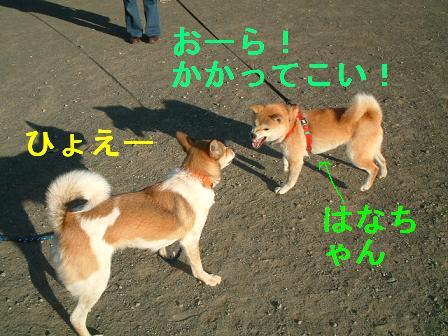 b0069163_126878.jpg