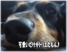 b0016976_13411593.jpg