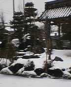雪景色_c0006432_9402760.jpg