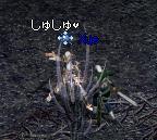 b0069679_251148.jpg