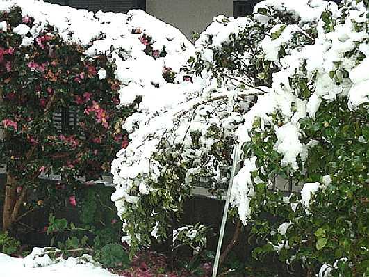 積雪5cm(福岡)_b0017645_9455738.jpg