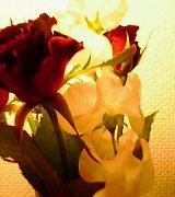 a0035483_1544421.jpg
