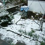 雪の大晦日_b0057675_1143389.jpg