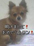 a0010389_19363713.jpg