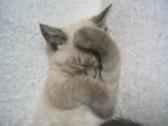猫派。犬派。2_c0006826_815474.jpg