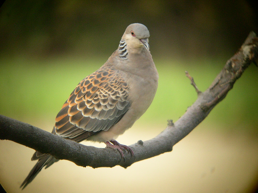 鳥の楽園・すみれば_b0049307_18582196.jpg