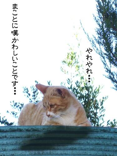 b0041894_15231464.jpg