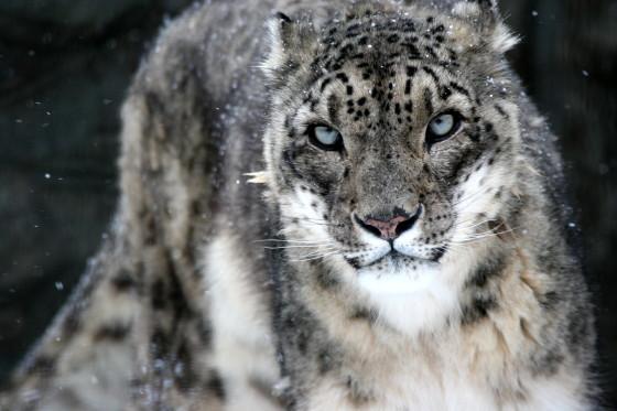 雪の動物園_b0016600_1371353.jpg