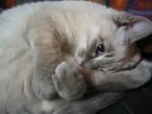 猫の魅力3  爪(番外編)_c0006826_7373155.jpg