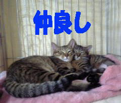 c0017777_16165172.jpg