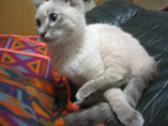 猫の魅力4  しっぽ_c0006826_854789.jpg