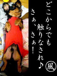 b0048649_18543559.jpg