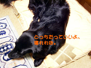 c0030967_20104761.jpg