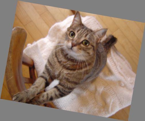 雪の北海道脱出!東京で猫とのぬくぬく生活_a0024535_1020715.jpg