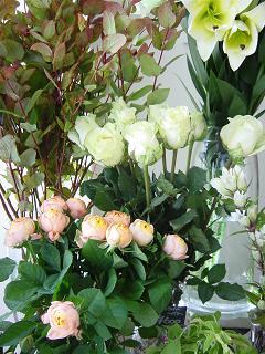 お店の花たち・・・_c0033678_2246880.jpg