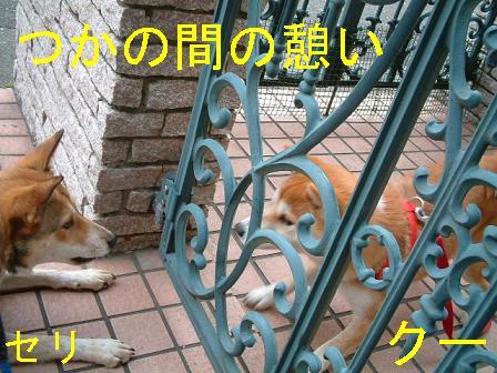 b0069163_15154351.jpg