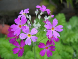 気が付けば春の花が・・・_a0015682_12464327.jpg