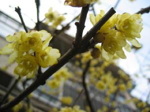 気が付けば春の花が・・・_a0015682_12484540.jpg