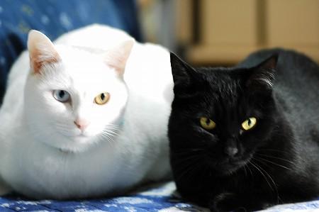 猫カフェ目指して_a0020021_22284155.jpg