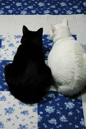 猫カフェ目指して_a0020021_22293580.jpg