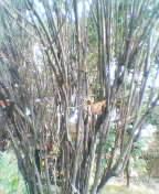 b0021397_20107100.jpg
