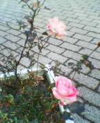 b0021397_2010723.jpg