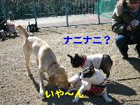 b0026701_19454275.jpg