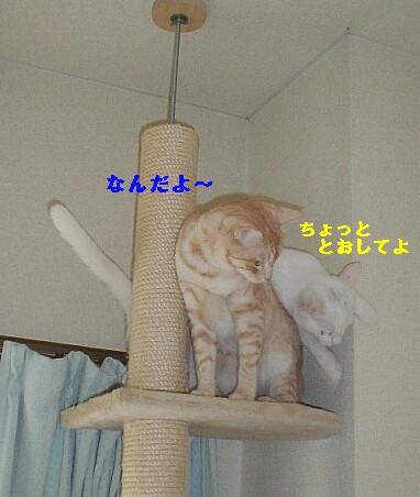 b0024945_025118.jpg