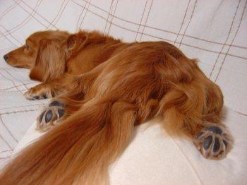 Cushion_c0001631_22545647.jpg