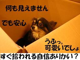 c0004744_22115879.jpg